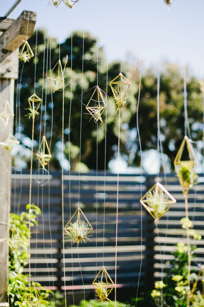 hanging air plants display idea pop shop america