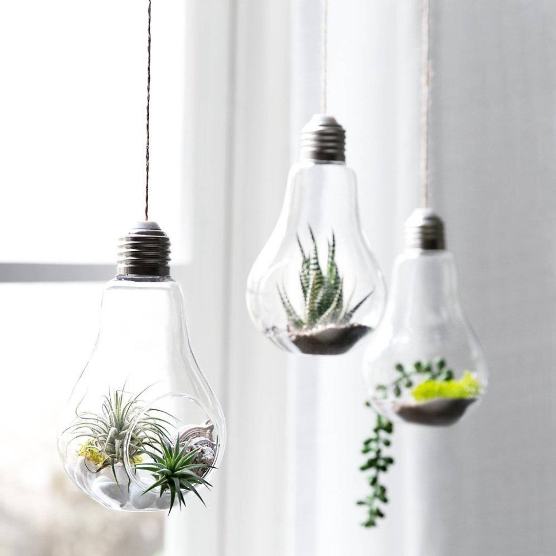 lightbulb air plant and terrarium hanging planter