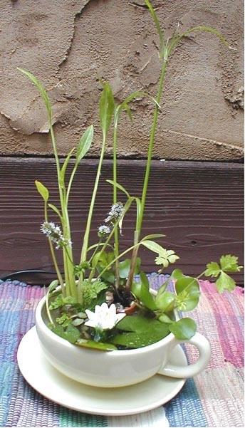 mini-pond-in-a-teacup water planter pop shop america