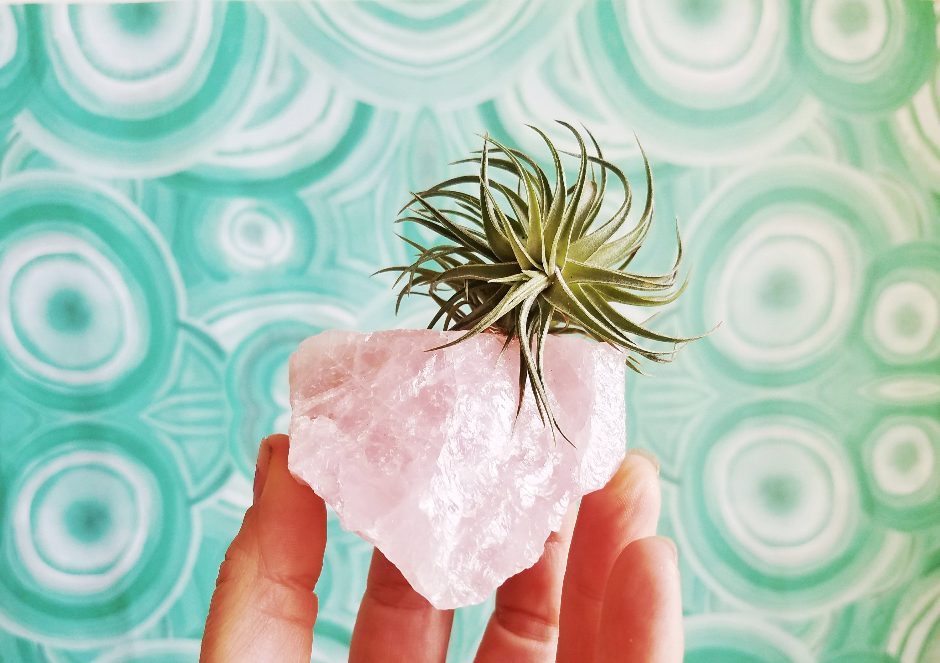 rose quartz air plant holder etsy shop pop shop america