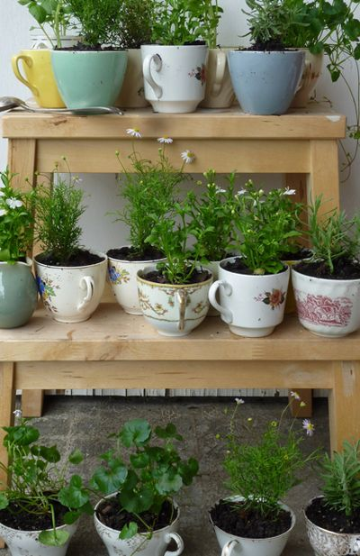 shelves of teacup gardens by the bower bird stories
