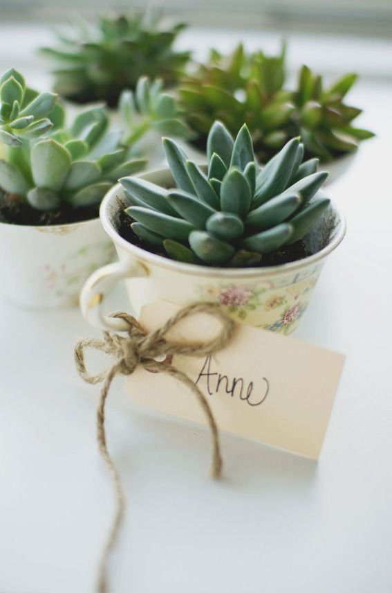 succulent-in-tea-cup-wedding-favors