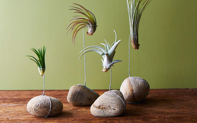 tillandsia-rocks-diy-idea-for-plants