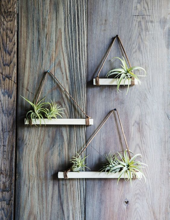 triangle shelves for air plants pop shop america
