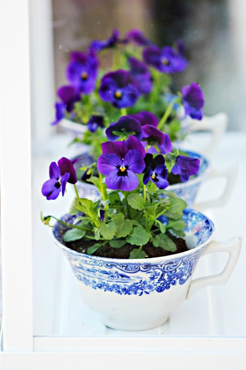 violets-in-teacups-planters-by-pop-shop-america