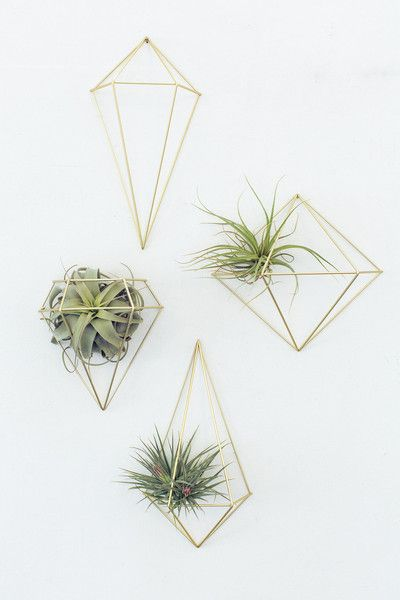 wall decor pop shop america air plant display