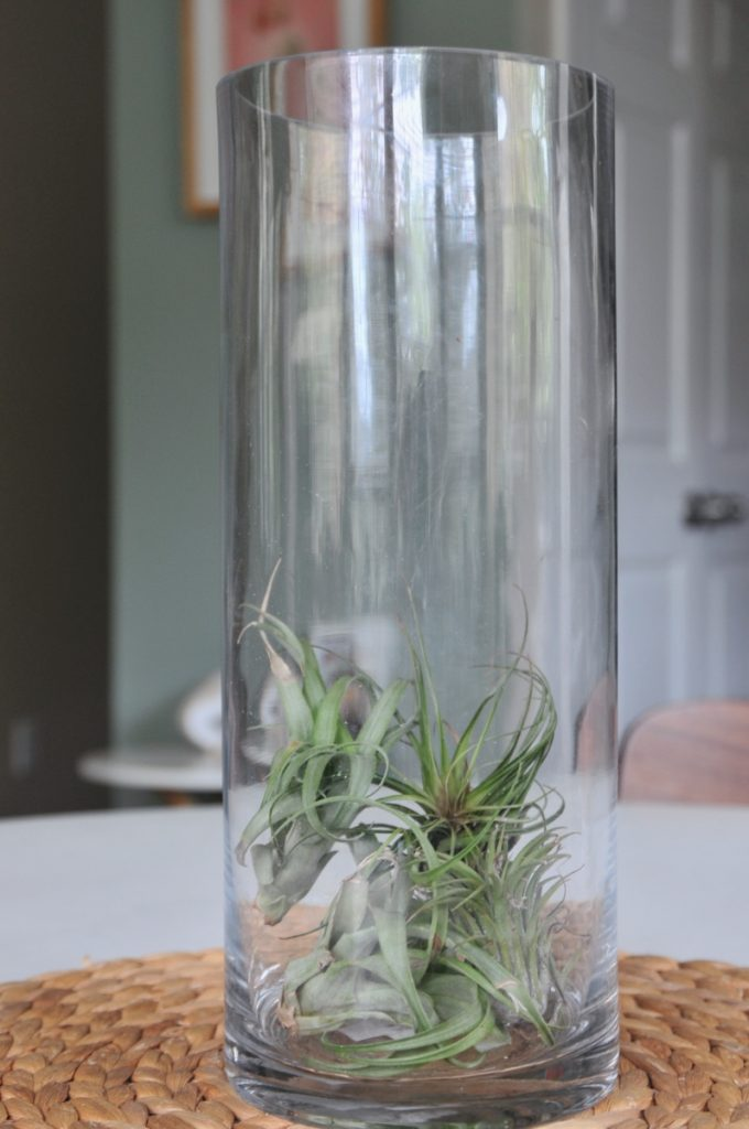 add air plants diy centerpiece pop shop america