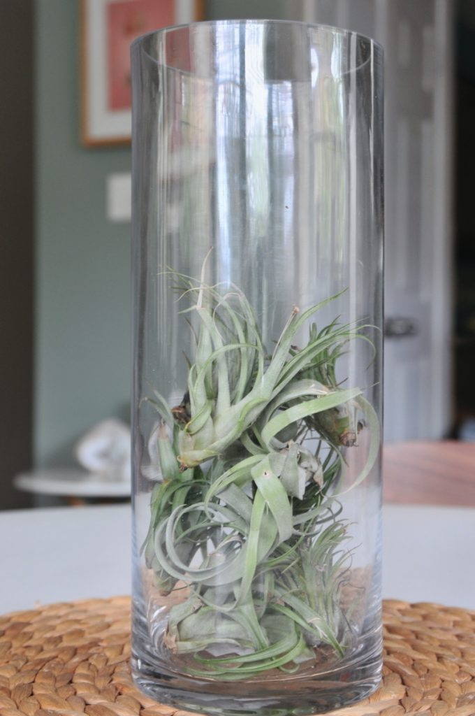add more air plants to make a glass centerpiece