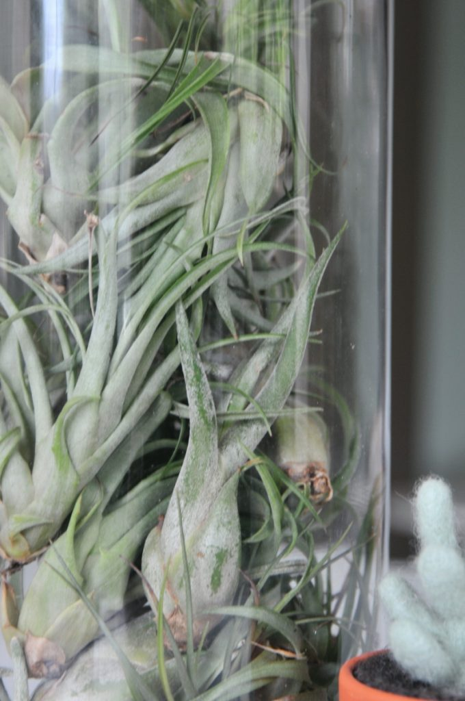 air plant centerpiece diy close up - pop shop america