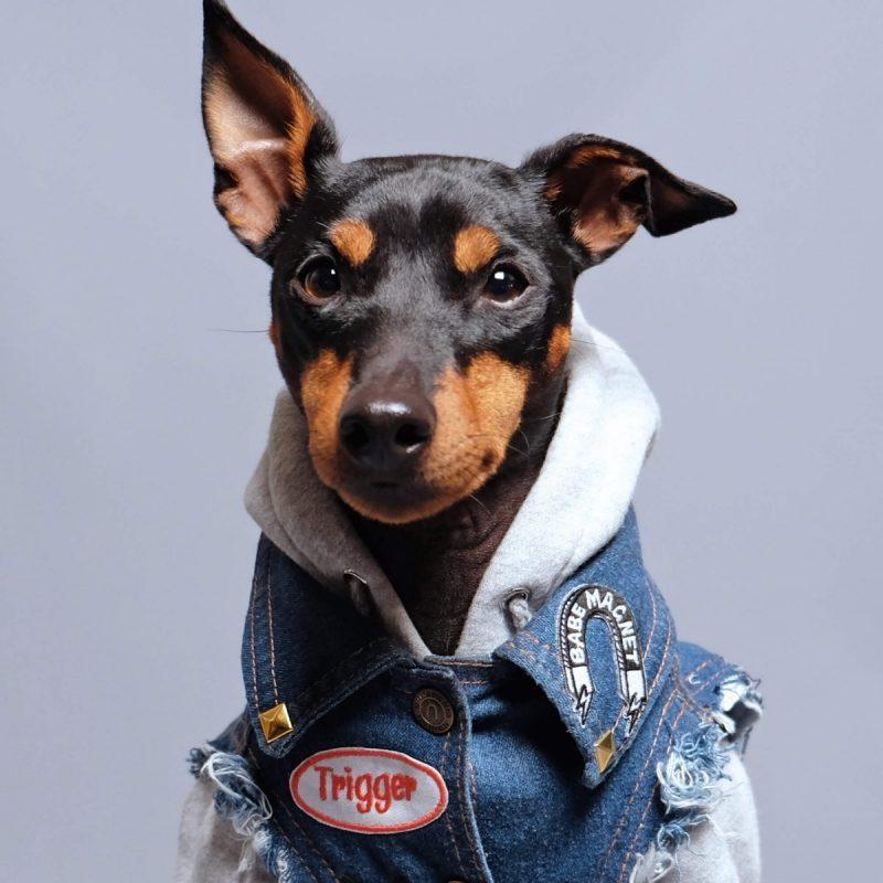 close up detail of pethaus australian dog clothes denim jacket