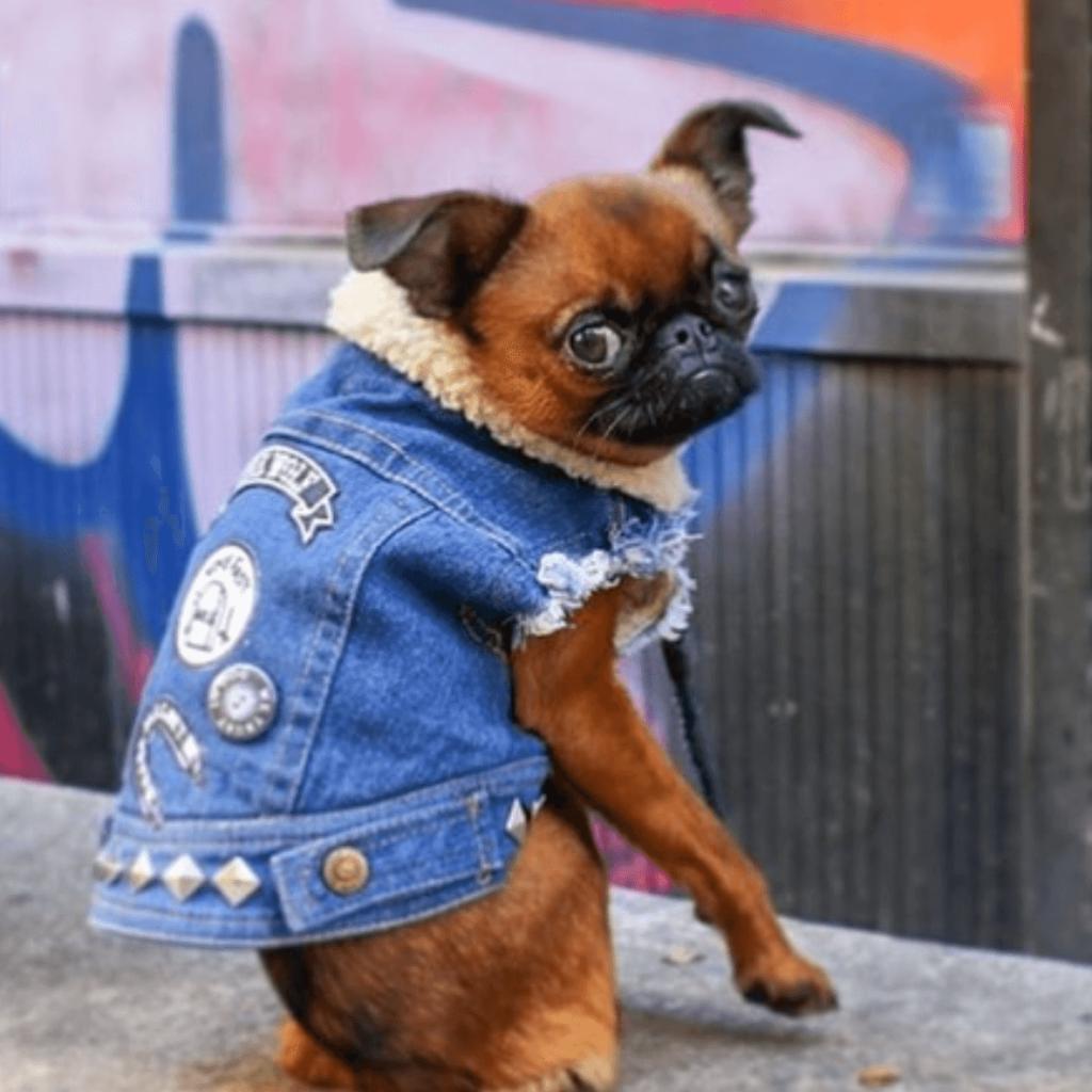dogs wearing pethaus punk fashion dog clothes