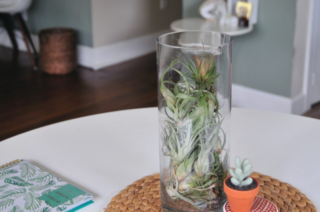dreamy air plant centerpiece pop shop america home diy