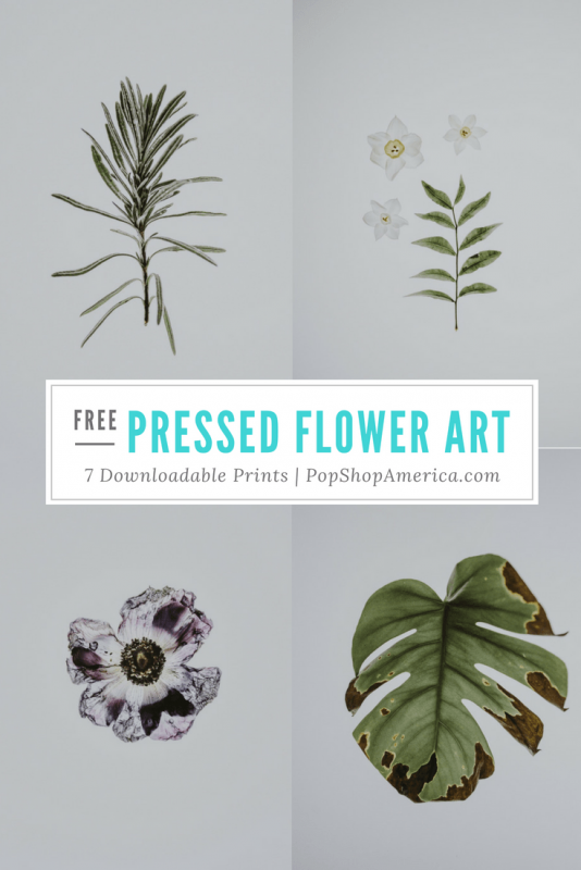 free pressed flower art prints pop shop america