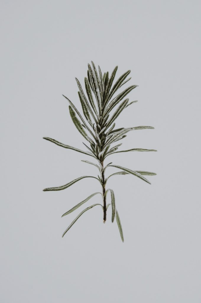rosemary pressed botanical print art - free pop shop america