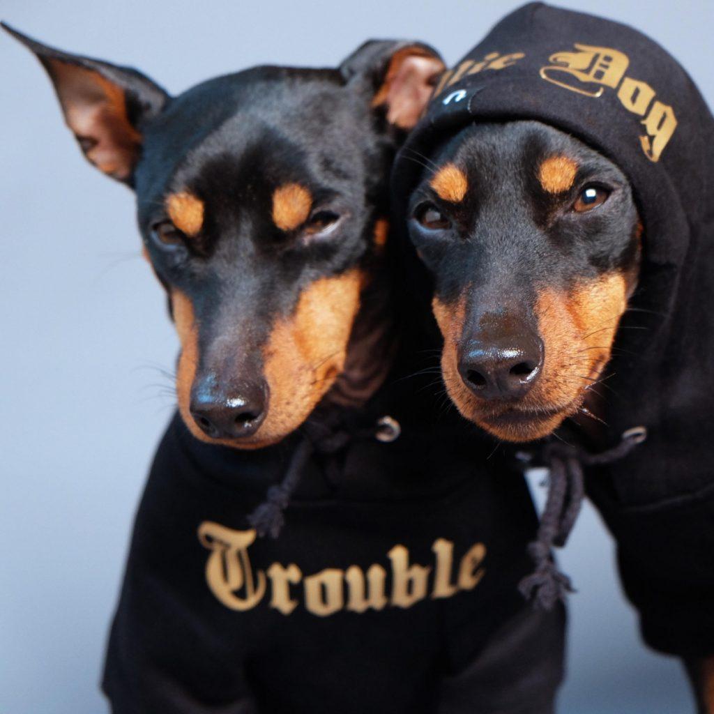 trouble and willie dog gangsta hoodies pop shop america