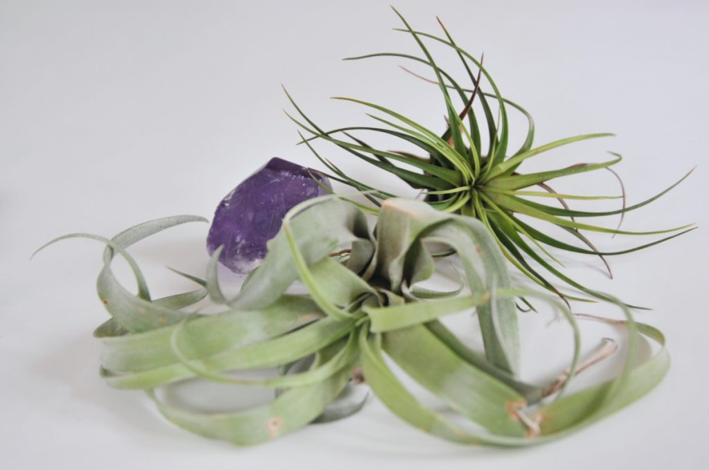up close with air plants diy air plant centerpiece