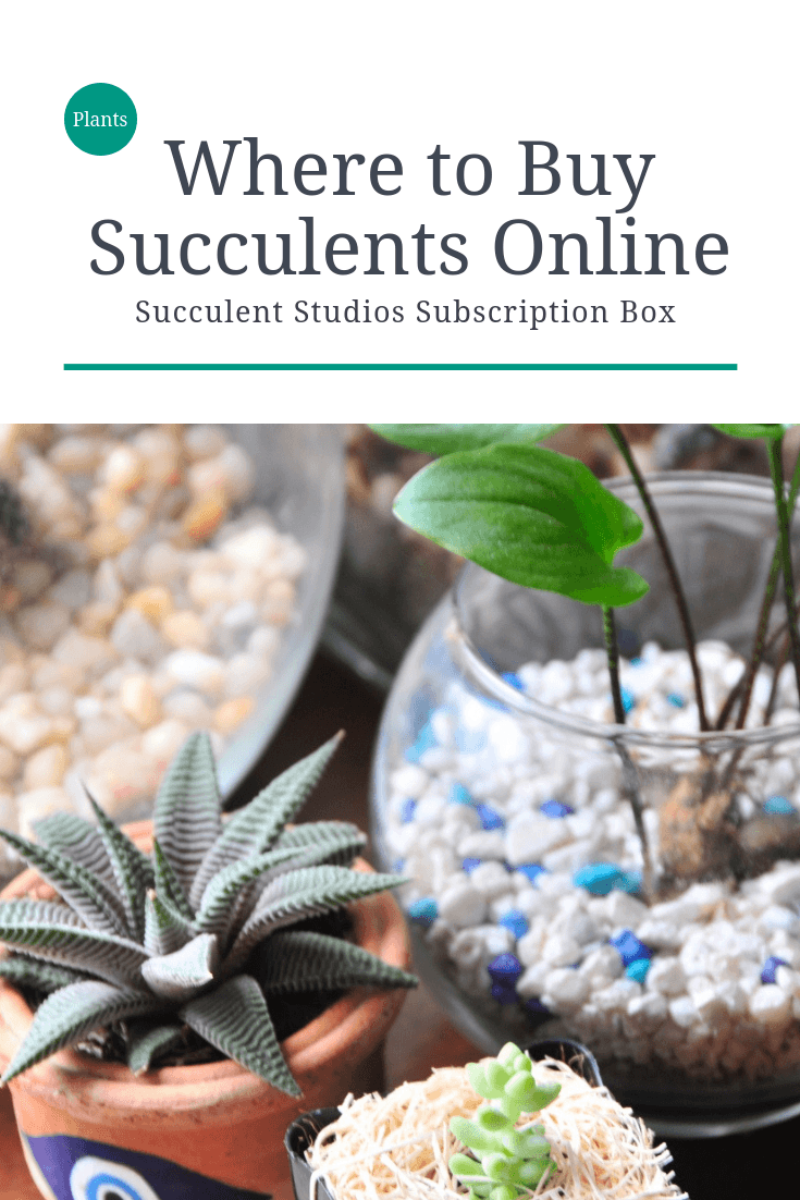 where to buy succulents online pop shop america