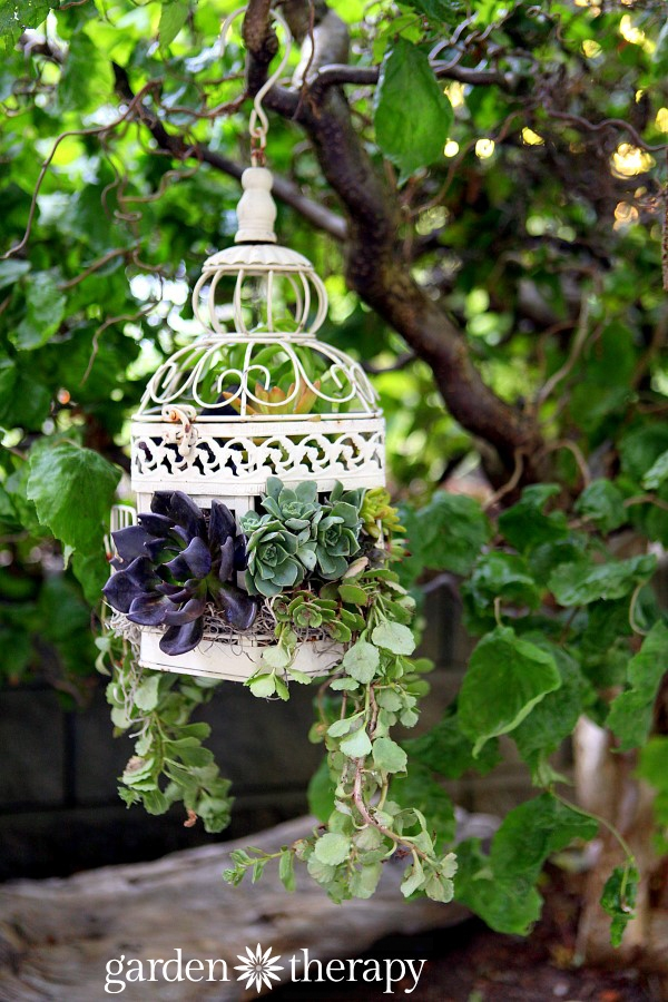 How-to-Make-a-Birdcage-Succulent-Planter