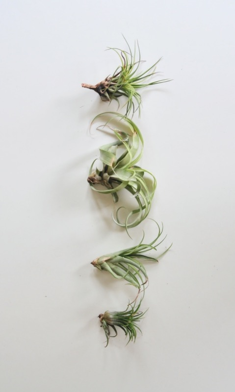 how-to-display-air-plants-indoors-pop-shop-america_craft-in-style-box slim