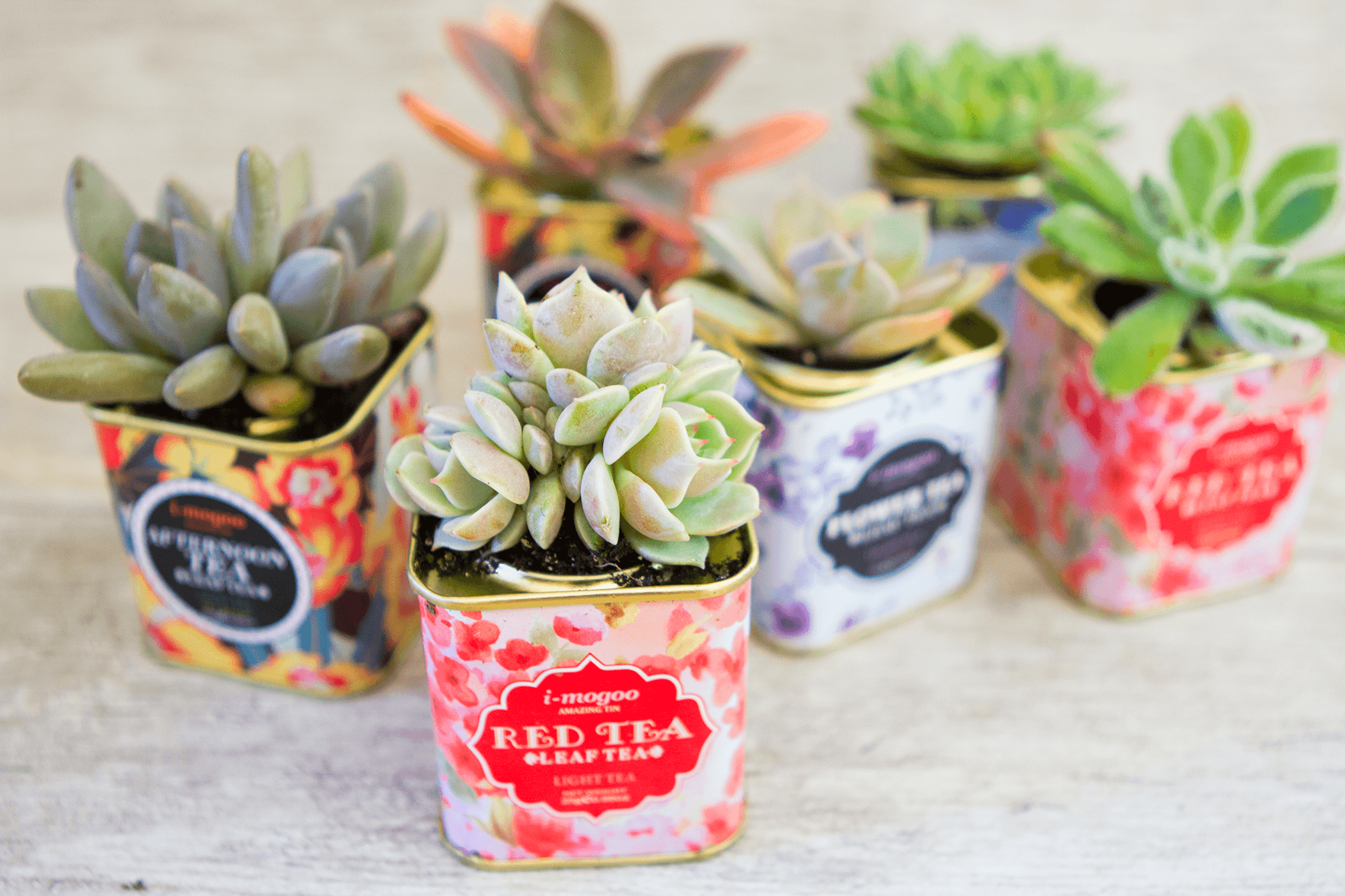succulents-tea-tins-terrariums