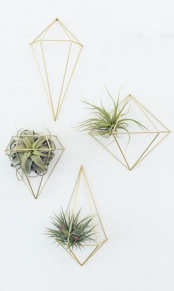 wall-decor-pop-shop-america-air-plant-display_craft in style
