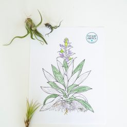adult coloring pages with air plants pop shop america