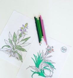 air plant adult coloring sheets pop shop america_small_tiny