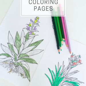 free air plant adult coloring pages prints pop shop america