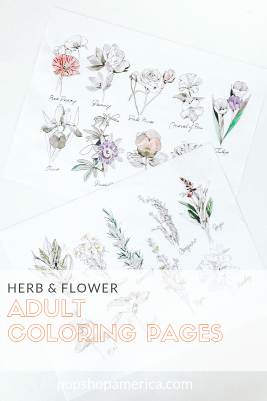 herb and flower adult coloring pages diy pop shop america