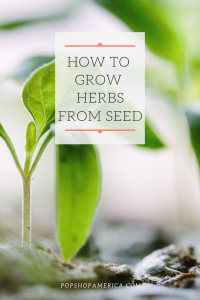 how to grow herbs from seed pop shop america