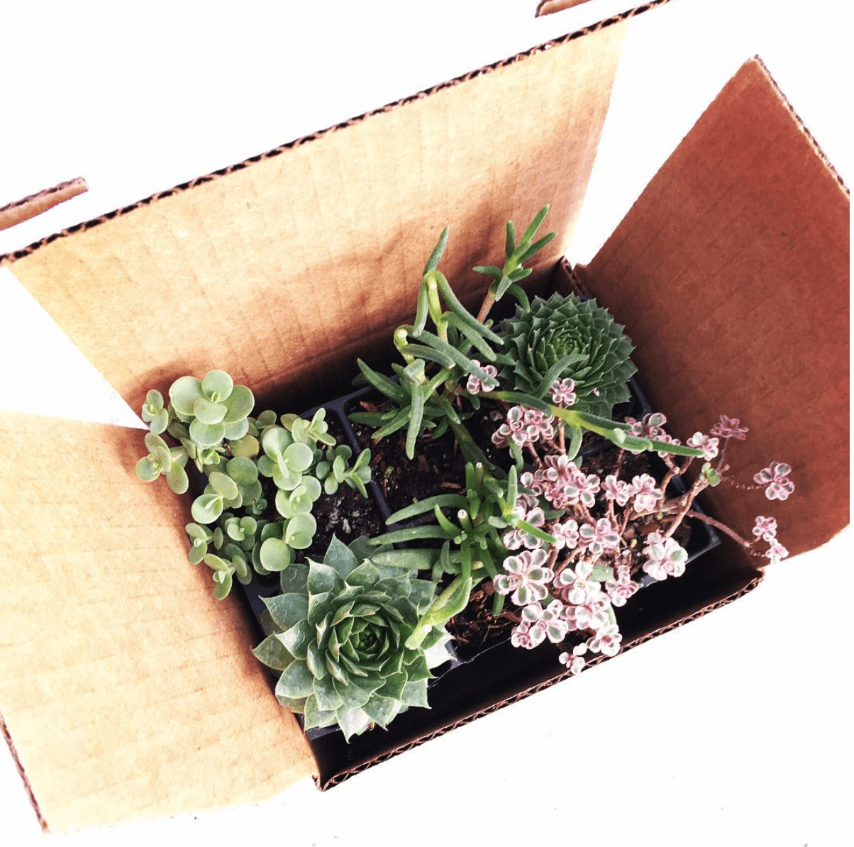 my garden box diy plant subscription box