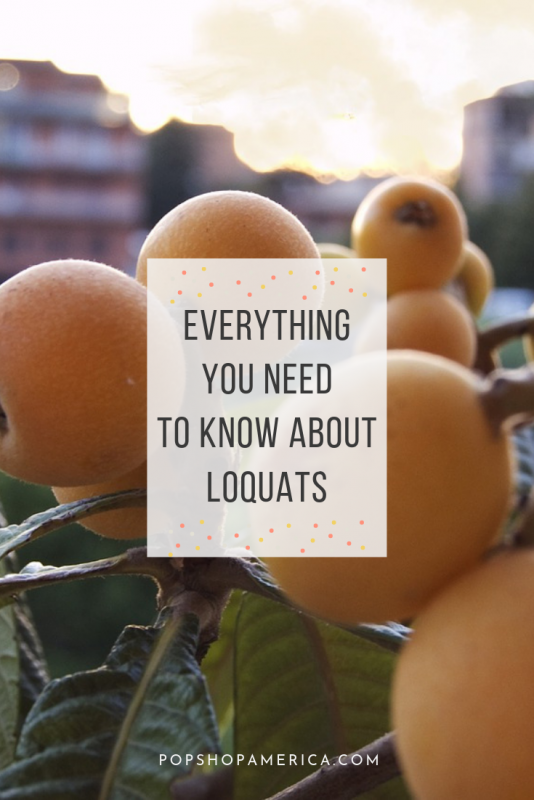 everything you need to know about loquats fruit pop shop america