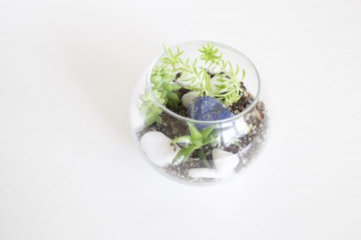 diy terrarium with succulents craft supply kit