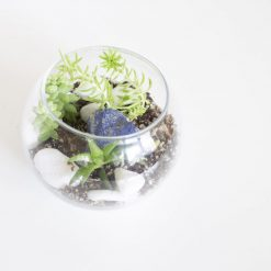 diy-terrarium-with-succulents-craft-supply-kit-scaled_Square