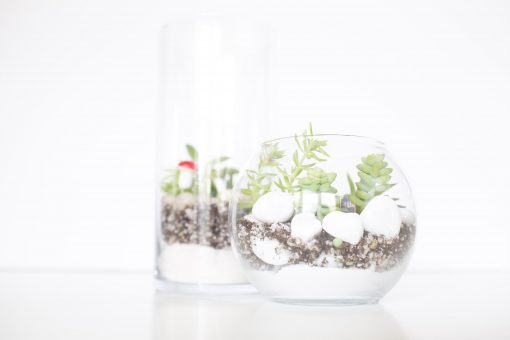 featured diy terrarium with succulents kit pop shop america