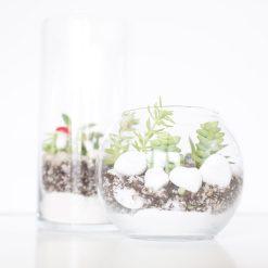 featured-diy-terrarium-with-succulents-kit-pop-shop-america-scaled_square