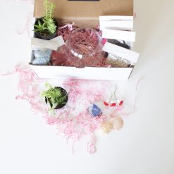 supplies inside the make your own succulent terrarium kit