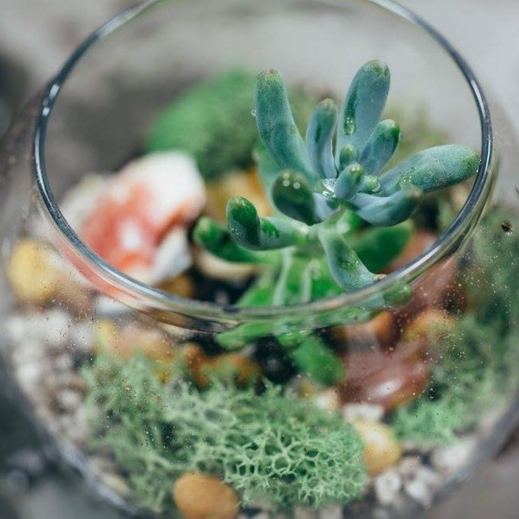 terrarium kit with succulents pop shop america