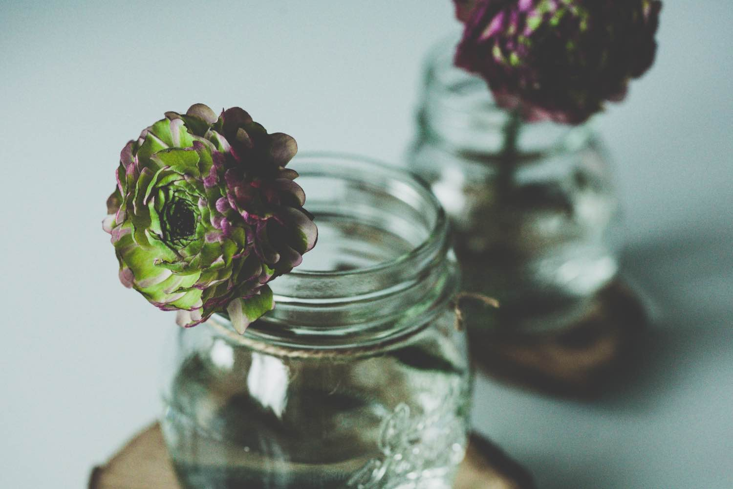 green and purple ranunculus flower in a mason jar