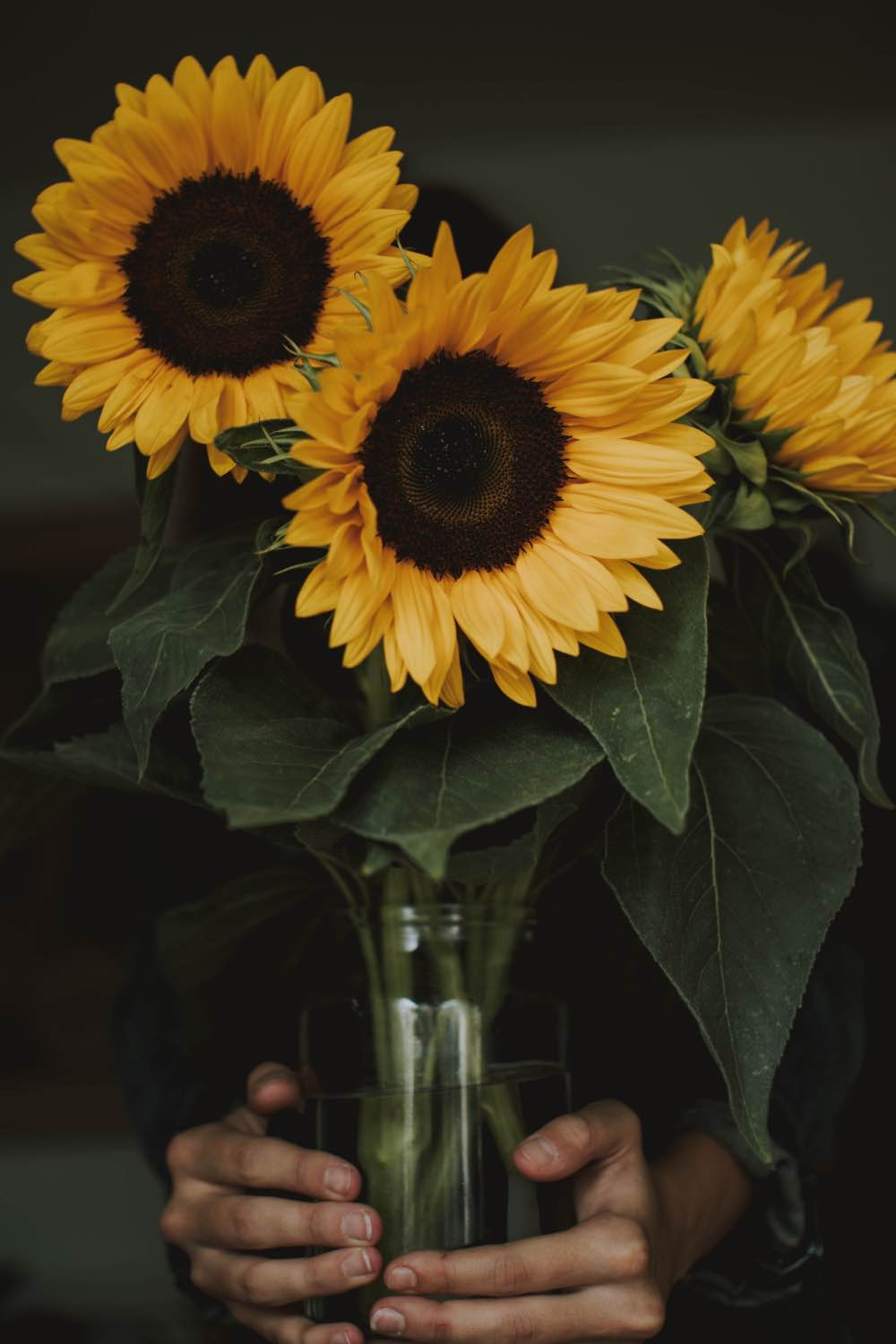oversized sunflowers in a mason jar pop shop america