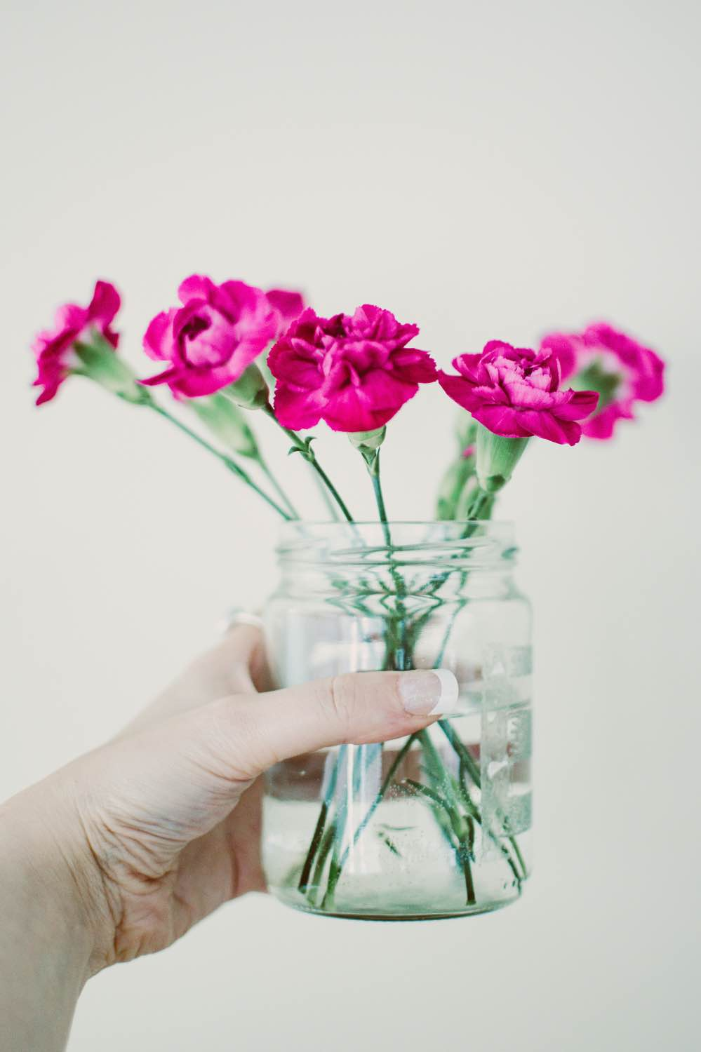 pink carnations in a simple glass jar pop shop america