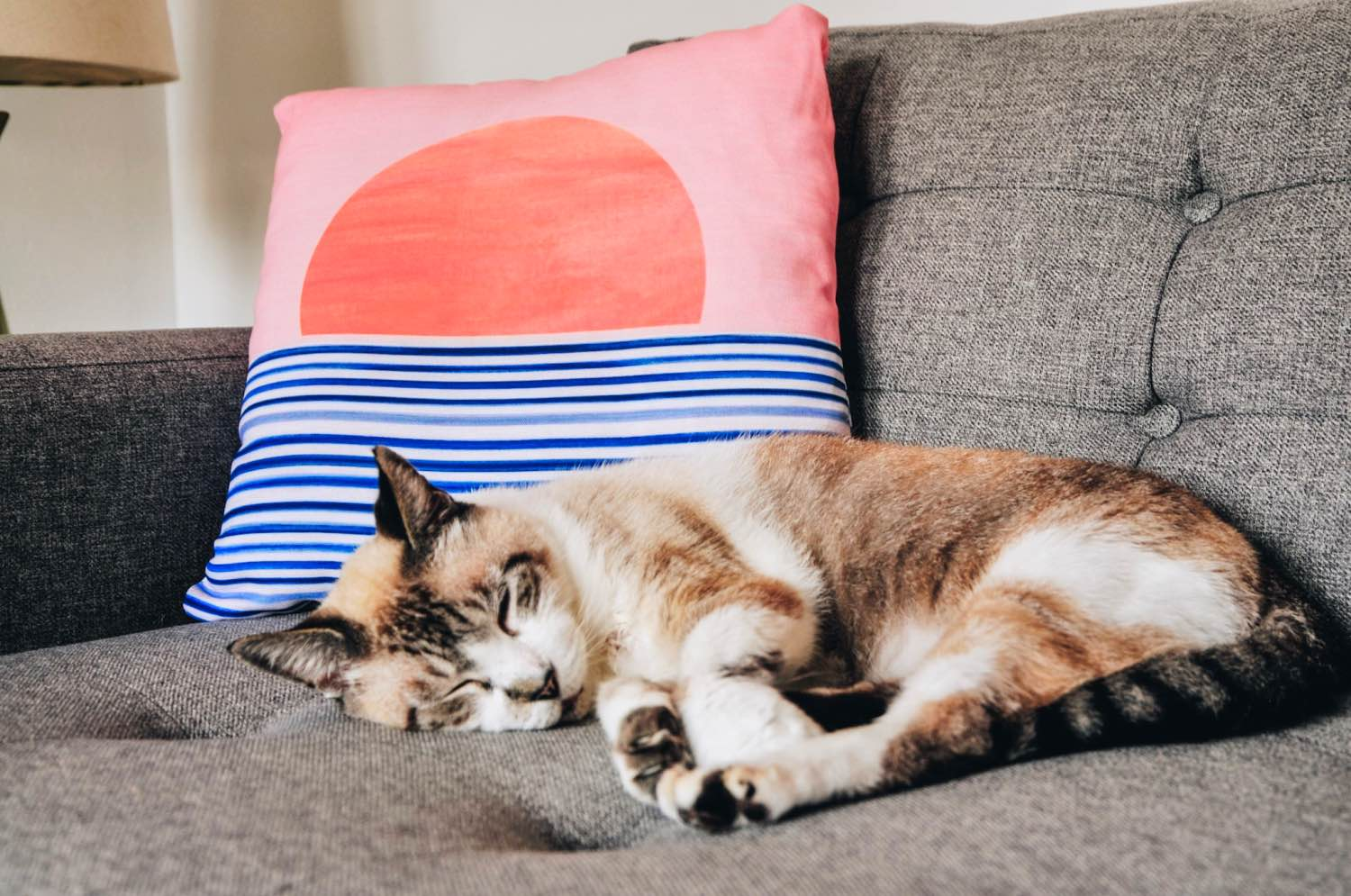 handsome the cat sleeping with a society6 pillow