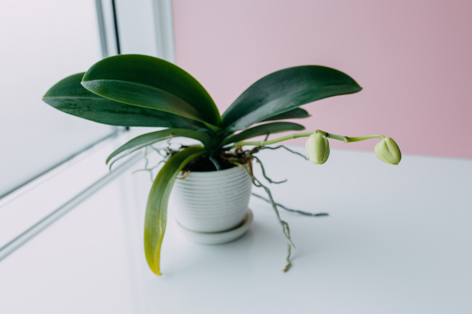 how to care for orchids guide pop shop america