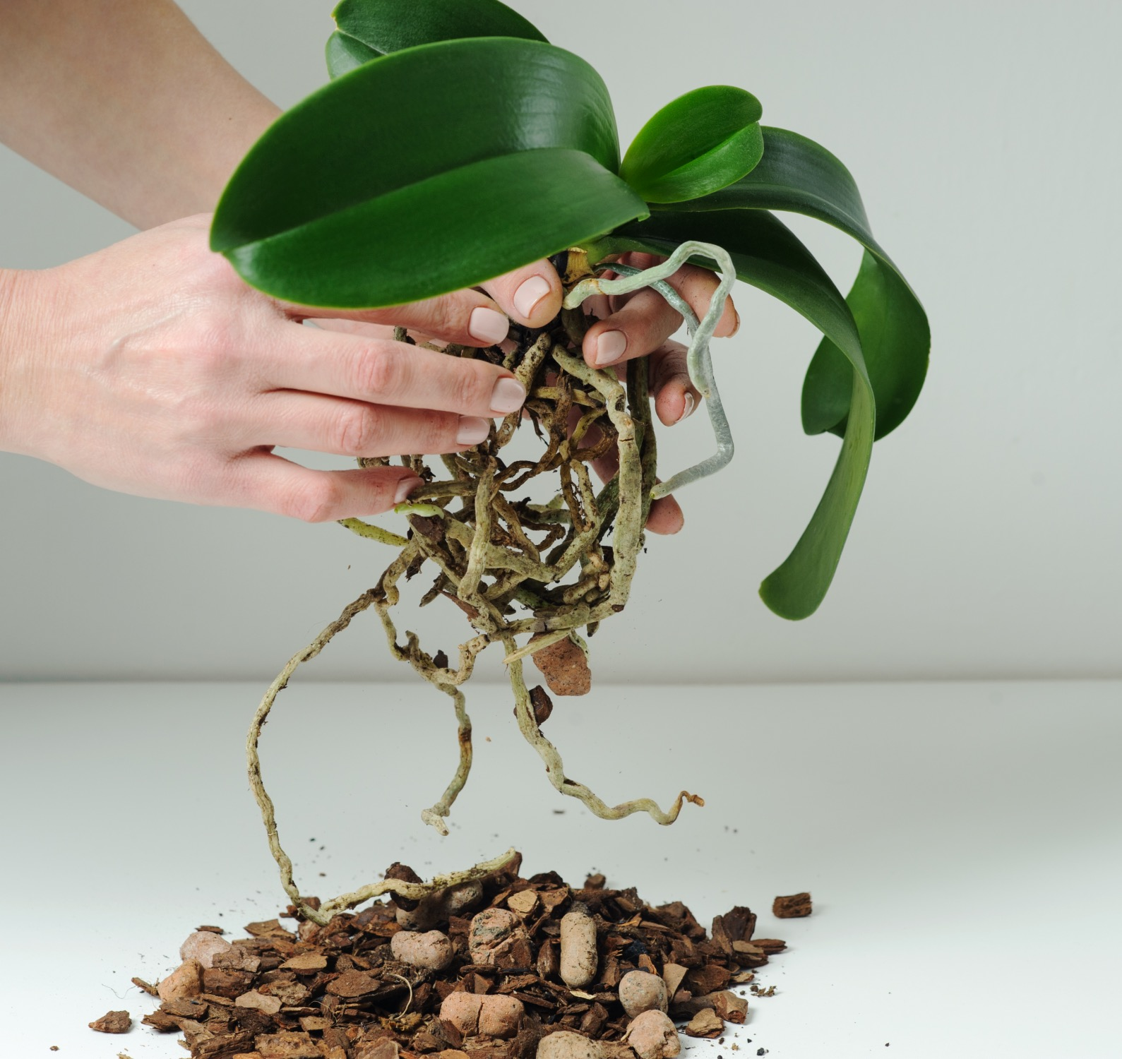 loose medium for potting orchid - plant care
