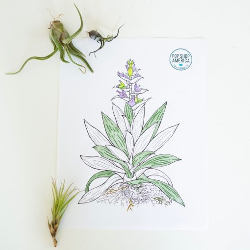adult-coloring-pages-with-air-plants-pop-shop-america_square
