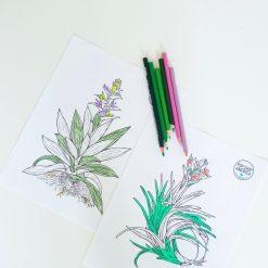 air-plant-adult-coloring-sheets-pop-shop-america_square