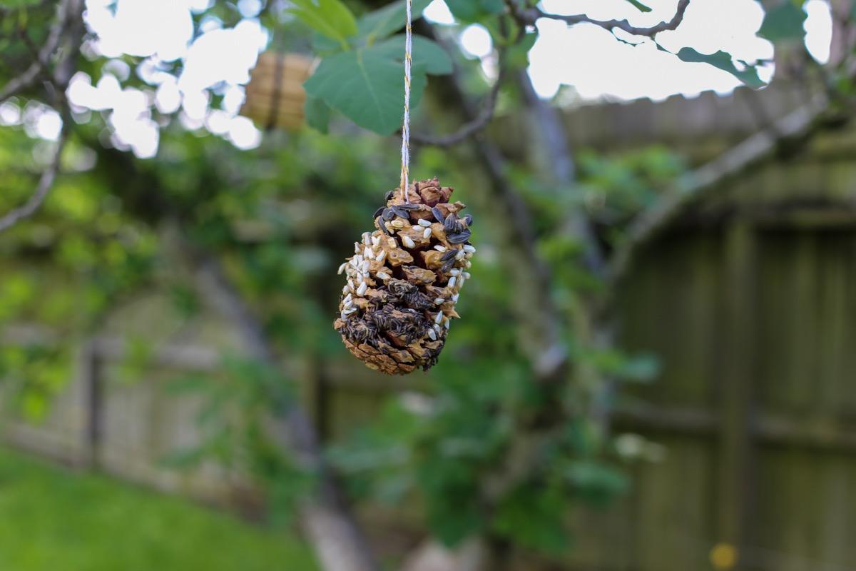 diy pine cone and peanut butter bird feeder