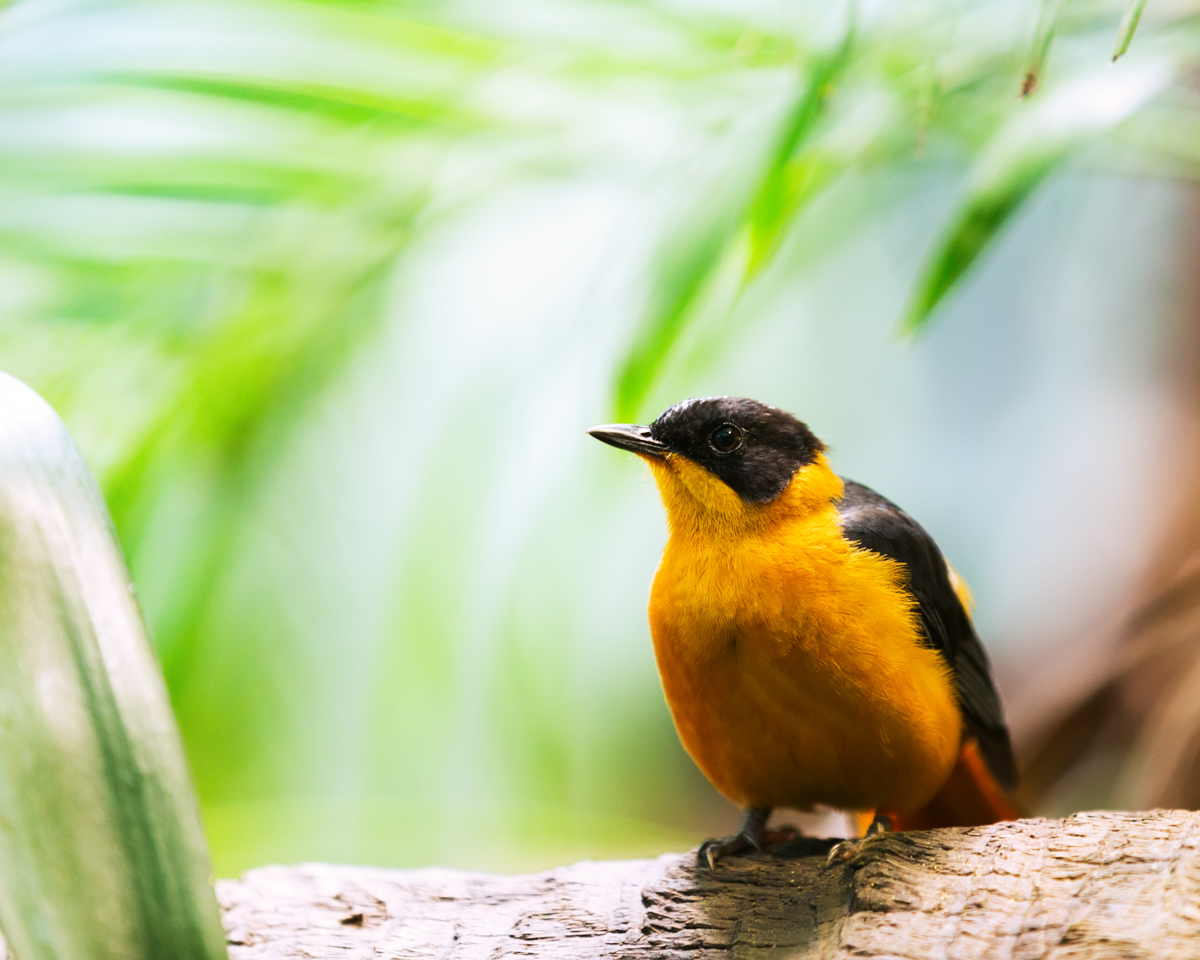 oriole_yellow_bird_atracting_birdseed_make_your_own_bird_feeder_kit_pop_shop_america