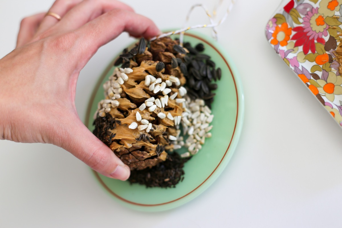 pine cone covered in bird seed diy tutorial pop shop america