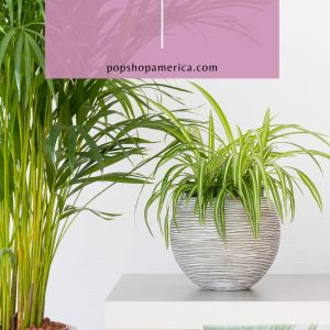 7 Best INdoor House Plants